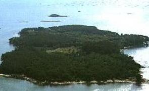 O maior bosque de loureiros de Europa