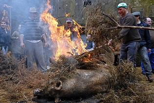 Matanza del cerdo 2019 de la Irmandade Galega de Rubí